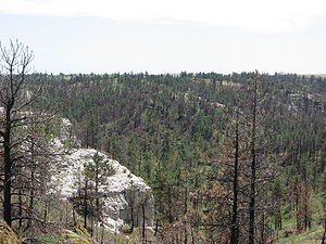 Pine Ridge National Recreation Area - Forested Hills in Pine Ridge NRA