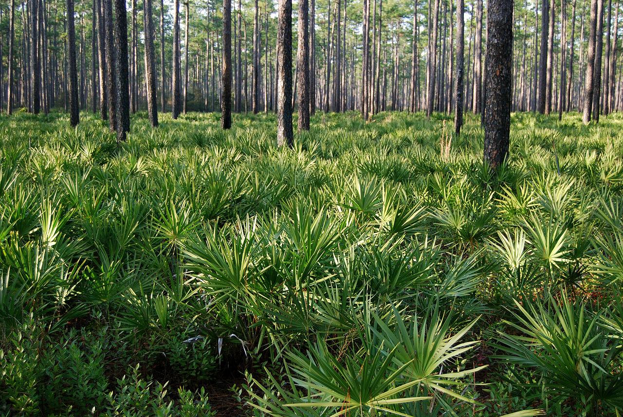 Osceola National Forest Wikiwand