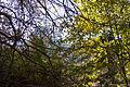 Piszkéstető astrodome from the forest.jpg