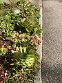 Plant.2422.JPG