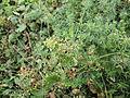 Plant 32 (6847570962).jpg