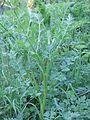 PlanteA-6.jpg