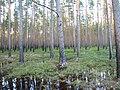 Pludi 2011 - panoramio (13).jpg