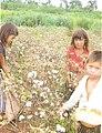 Poblac cultivand12.JPG