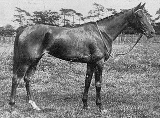 Pogrom (horse) British Thoroughbred racehorse