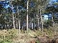 Pointe du blaire - panoramio (1).jpg