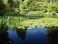 Pond in Arduaine Gardens - geograph.org.uk - 1362151.jpg
