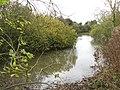 Pond west of Hall Farm - geograph.org.uk - 1581276.jpg
