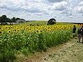 Pope Farm Conservancy - panoramio - Corey Coyle (6).jpg