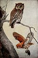 Portraits and Habits of Our Birds-1 0079.jpg