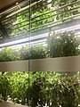 Project Farmhouse - hydroponic greenwall close up.jpg