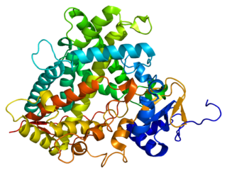 CYP1A2 mammalian protein found in Homo sapiens