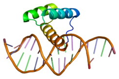 Protein MSX1 PDB 1ig7.png