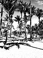 Puerto Plata Palm Trees - Flickr - MassiveKontent.jpg