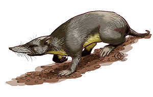 Fauna of Puerto Rico - Artistic representation of the extinct Puerto Rican shrew