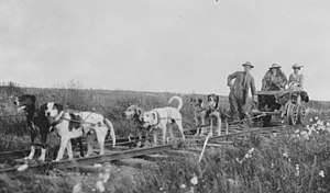 Dog type - Cart dogs, c. 1900. Different in appearance but doing the same work.