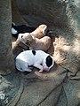 Puppies by Rupali.jpg