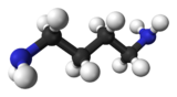 Ball and stick model of putrescine
