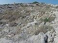 Qrendi, Malta - panoramio (113).jpg