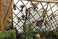 Quitos botaniska trädgård-IMG 8786.JPG