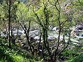 Río Tambre GDFL200306.jpg