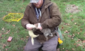 Rabbit Hunting with NightHunterWhippets|Ferreting UK|Rabbit Pest Control 2.png