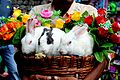 Rabbits in a basket.jpg