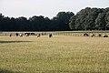 Racehorses grazing - geograph.org.uk - 865386.jpg