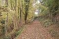 Rails through the leaves - geograph.org.uk - 1560224.jpg