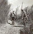 RangerstrektallgrassJan1945.jpg