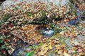 Rešovské vodopády na podzim 03.jpg