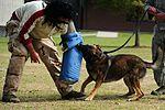 Red Ribbon Week- Military working dog! 121030-F-NW227-003.jpg