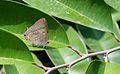 Redspot butterfly.jpg