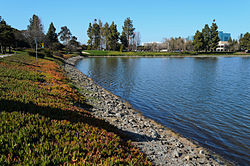 Redwood Shores Lagoon, with Oracle headquarters visible in the background