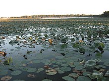 Reelfoot Lake   Revolvy