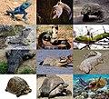 Reptiles 2021 collage.jpg
