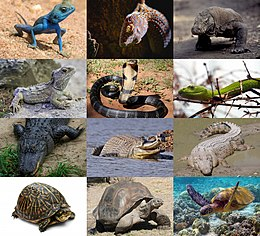 Reptilien 2021 Collage.jpg