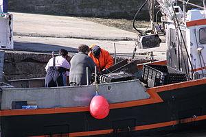 Retour de la pêche à la seiche du fileyeur Jason IV (40).JPG