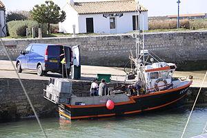 Retour de la pêche à la seiche du fileyeur Jason IV (49).JPG