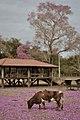 Retrato rural (Poconé, Mato Grosso, Brasil) (10088850193).jpg