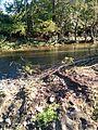 Ribnica river, close to Brezdje.jpg