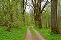 Riparian forest - Flickr - Stiller Beobachter.jpg