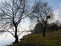 Rive Loire.jpg