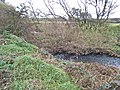 River Browney - geograph.org.uk - 272966.jpg