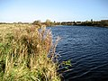 River Tees beside the Bowsfield Nature Reserve - geograph.org.uk - 2145275.jpg