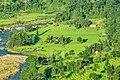 River side rice fields.jpg