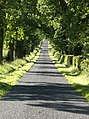 Road, Muirhead - geograph.org.uk - 201680.jpg