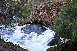 Water exiting a hole in a riverbank forms a smooth rounded mound surrounded by churning rapids. Evergreen trees hang over the water.