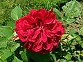 Rosa L.D. Braithwaite 2019-06-04 6255.jpg