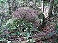 RoundLake (Tiger Mtn, WA) erratic.jpg